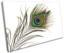Peacock Feathers Animals - 13-1394(00B)-SG32-LO